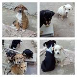 Cachorros En Adopcion Responsable Patitas De San Vicente