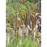 Formios, Rafias, Árboles Palmeras Arbustos Césped Tierra