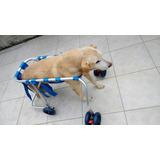 Cadeira De Roda Para Cão (andador) De 20kg A 30kg