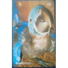 Cartão Telefônico Arara Azul Filhote Ms Cartão Raro