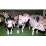 Combo Manuales Cria De Cerdos, Gallinas Ponedora Y Conejos