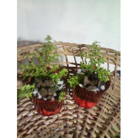 Mini Plantitas Deco. Oficina,casa,regalo,suvenirs..