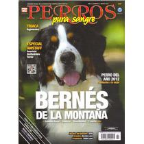Revista De Perros Bernés De La Montaña Marzo 2013