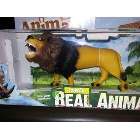 Animais Selvagem Leão Selvagem Africano Ano Mas Da Fazenda