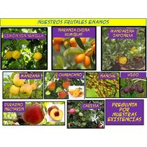 Arboles Frutales Enanos Para Maceta