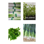 200 Sementes De Cheiro Verde:  Cebolinha + Salsinha