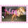Carrito Para Perros En Rehabilitación Con Pedal Wocars
