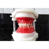 Typodont Para Ortodontia