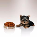 Comida Para Cachorros Ab Premium 18 Kg