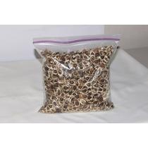 Semillas De Moringa 1 Kilo