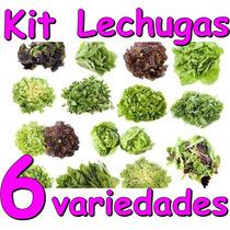 Kit Para Cultivar Lechugas Principiantes Hidroponia Semillas