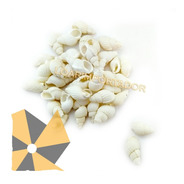 100 Caracoles Chiquitos Blancos