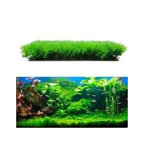 10 Sementes De Relva Gramíneas Aquário Grama Planta Natural