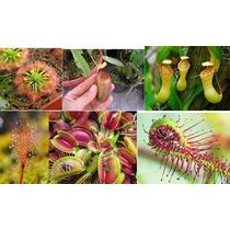 Mix De Sementes De Plantas Carnívora + Frete Grátis !!!