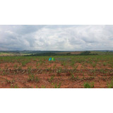 Fazenda Cana De Açúcar - 372 Ha - Região São Sebastião Paraíso (mg) - Codigo: Fa0114 - Fa0114