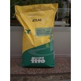 Semilla De Maiz Atlas