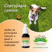 Floral Pet Bio Animal Flower 30ml Vários Tratamentos Escolha