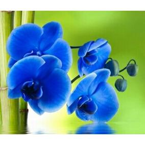 Sementes De Orquídea Azul - 12 Sementes P/ Mudas