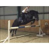 Yegua Extremadamente Talentosa (caballo Para La Venta)