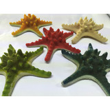 Estrellas De Mar Coral Decoracion Para Pecera