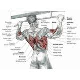Musculos: Movimientos De Musculacion Hombres Y Mujeres