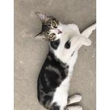 Gatito Macho De 6 Meses En Adopción.