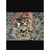 Semillas De Moringa 1 Kg