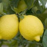 Combo Limonero 4 Est. + Naranjo + Mandarina + Pomelo Rosado