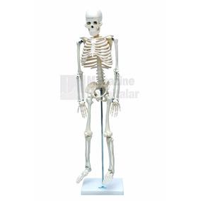 Esqueleto Humano 85cm Modelo Anatômico Frete Grátis Oferta