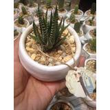 Cactus Y Suculentas En Maceta De Barro Decoradas.
