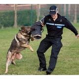 Aulas Para Todas As Raças Adestramento De Cães Em 3 Dvds L3ç