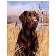 Pintura Numerada Cão Labrador