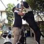 Cachorros Gran Danes!!!