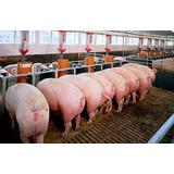 Archivos Y Manuals Porcino; Cerdos, Cochino En Pdf 19 Archiv