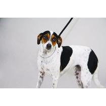 Coleira Enforcador De Metal Resistente Para Cães 35 Cm