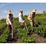 Libros De Agricultura Pdf