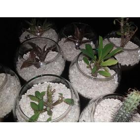 Plantas Naturales En Pecera De Cristal