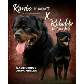 Vendo Cachorros Rottweilers , Solo Machos Disponible