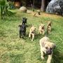 Cachorros Cimarrónes