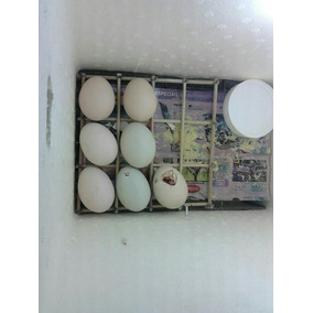 Chocadeira Caseira Manual 30 Ovos Galinha (manual)