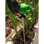 Plantas Carnívoras Tutores Venus Dionaea Moron Julypets