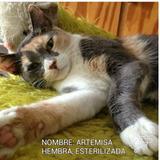 Hermosos Gatitos En Adopcion Caracas Gato Gatico