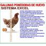 Gallinas Ponedoras De Huevo Sistema Excel Control Total