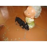 Cachorro Mini Pincher Miniatura