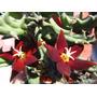 Set Nº4 .x5 Plantas. 80 Variedades. Suculentas-cactus Nº9.