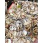 Conchas Marinas Y Tirabuzone En Bolsitas De 1 Kilo