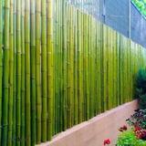 Cerco De Caña Tacuara - Pergolas Caña Bambu - 1m X 1.8 Alto