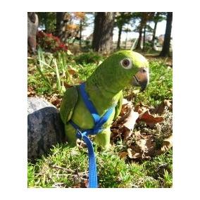 Coleira Para Papagaio - Guia + Peitoral - Frete R$10,00