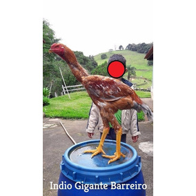 Ovos Galados Índio Gigante Puro