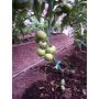 Fertilice Sus Jardines O Cultivos Con Abono Orgánico-compost